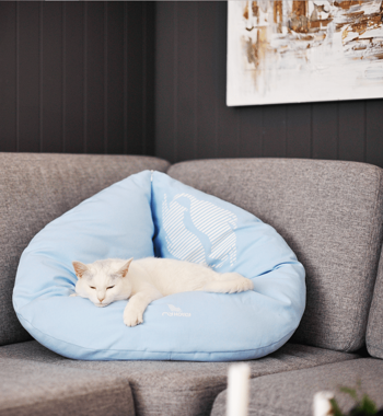 SET OTI+ EMI cat beds